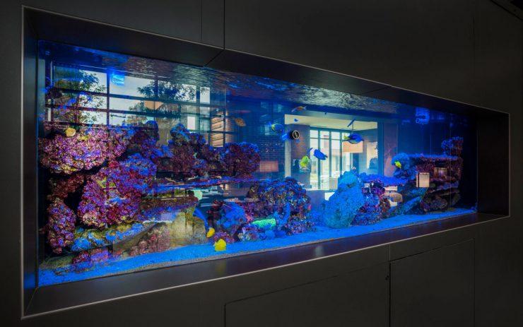 An exotic saltwater aquarium in The Belgard luxury apartment